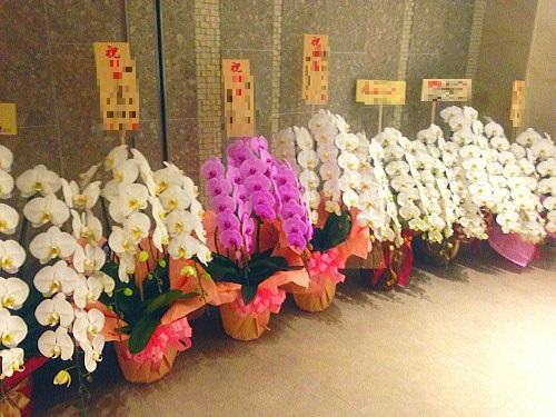 開院祝いの花の色